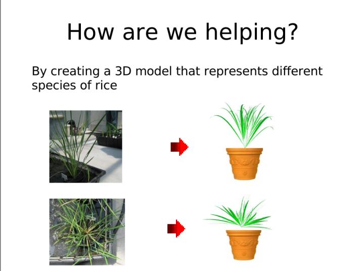 Rice Camp I